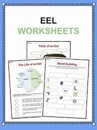 eel facts worksheets information for