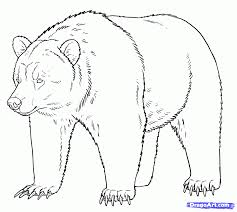 Grizzly Bear Illustration How To Draw