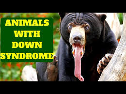 Image of: Tiger Amazing Animals With Down Syndrome Youtube Amazing Animals With Down Syndrome Youtube