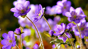 amazing nature beautiful blooming flower time lapse video you