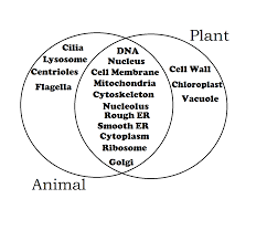 Plant And Animals Adaptations Venn Diagram Plant Project Biology En Flora Leaves Needles Plants