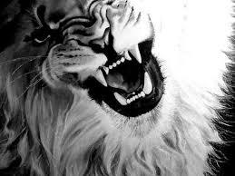 lion roaring black and white.  Roaring Lion Image Intended Lion Roaring Black And White A