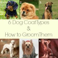 6 dog coat types how to groom them