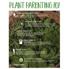 bonnie plants 19 3 oz sweet mint plant