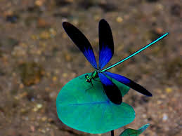 Image result for images dragonfly