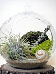 Sphere-shaped Hanging Glass Terrarium Plants Ideas