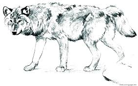 Wolf Coloring Pages To Print Wolf Coloring Pages Printable Wolf
