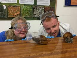 marvellous home office outline. Dartmoor Zoo Volunteers Ponder The Many Uses Of Slime With Help From A Pair Tiger Marvellous Home Office Outline