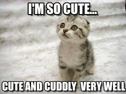 I'm So Cute... - Sad Cat meme on Memegen via Relatably.com