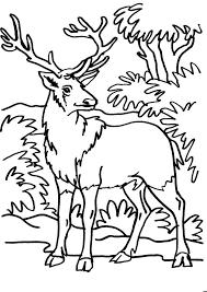 Disegno Cervo Da Coloraredisegno Volpe Da Colorare