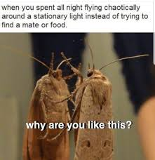 27 Moth Memes That Will Bring You Towards The Light Funny Gallery