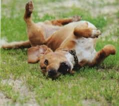 Resultado de imagen para imagenes de perros rascandose en el piso