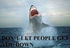 Motivational Shark - PandaWhale via Relatably.com