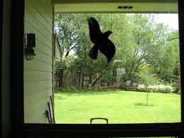 Vogelschlag