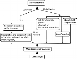 Flow Chart Of Microbial Enrichment And Analysis Strategies