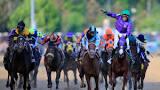 Image result for Racehorse called Rodadendum