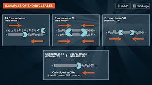 Exonuclease I Reaction Buffer Neb