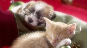 1920x1080 hd pics photos attractive pets kitten puppy cat dog sleeping beautiful nice hd quality desktop