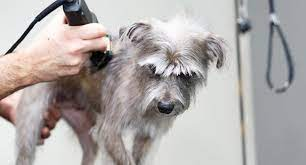 you cut dog hair with human clippers