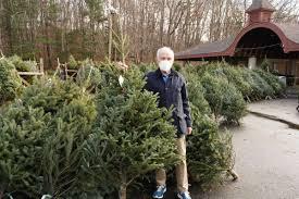 Massive' early tree sales at Kiwanis Park, New Canaan