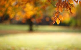 hd widescreen backgrounds.  Widescreen Autumn Leaves Wallpaper Widescreen Hd For Hd Widescreen Backgrounds A