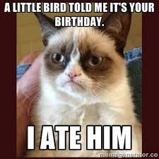 grumpy cat birthday bird. Contemporary Cat Throughout Grumpy Cat Birthday Bird