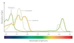 Color And Light Absorption Colour Chlorophyll And Chromatography Www Scienceinschool Org
