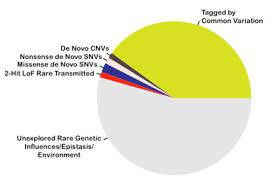 Ocd Pie Chart Slicing The Genetic Pie Spectrum Autism Research News