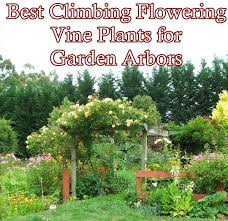 this list of the best climbing flowering vine plants for garden arbors and pergolas will help the homesteading gardener to pick and choose their favorites