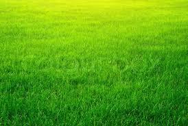 Grass background Picsart Green Grass Background Background Check All Green Grass Background Background Check All