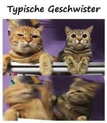 Sprüche Lustige Geschwister Kampf Meme Beste Lustige