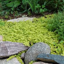Small Picture 10 Great Groundcover Plants BHGcom Better Homes and Gardens