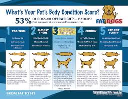 A Dogs New Years Resolution Lose 5 Pounds Dogshome