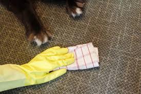 cleaning sisal rugs dog urine