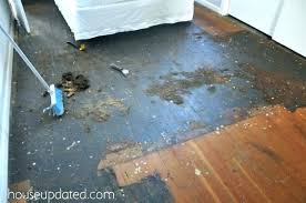 linoleum glue black hardwood adhesive remover vinyl tile guest bedroom carpet removal gone wrong up