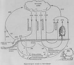 Реферат Структура и отношения внутри экосистемы com  Структура и отношения внутри экосистемы