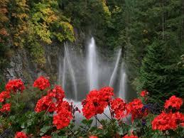 Imagini pentru natura