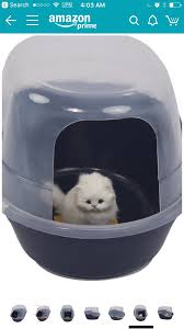 Looking up litter boxes on Amazon.