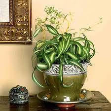 Indoor Plants Low Light 10 Best Low Light Houseplants Costa Farms
