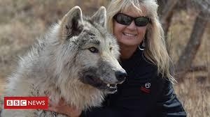 Why this <b>woman</b> hates to hear about 'big bad <b>wolf</b>' - BBC News