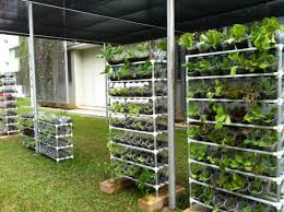 it s easy to grow your own organic vegetables at home