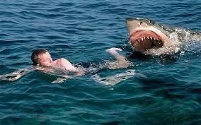 great white shark attack. Fine Attack Shark Attack Swimmer  Great White Throughout Attack C