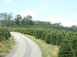 Chicagoland Illinois Christmas Tree Farms Chooseandcut Local Christmas Tree Lots