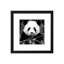 china 10mkm2 collection giant panda photographic print by philippe liked on polyvore featuring home home decor wall art framed posters framed  on giant panda wall art with china 10mkm2 collection giant panda photographic print by philippe