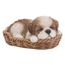 brown and white shih tzu puppy in a