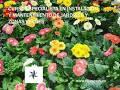 Resultado de imagen de Jardinería y jardines