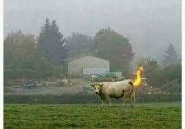 amiga e esse fogo no seu rabo aí🤔 - Memes de apaixonados | Facebook