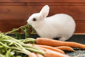 Best Rabbit Food Top Choices For 2019 Rabbit Expert