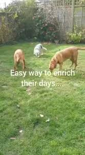 Thank you to Ida Welch for this video.... - Sunninghill Veterinary Centre UK