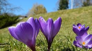 Voorjaar Bloemen Natuur - Gratis foto op Pixabay